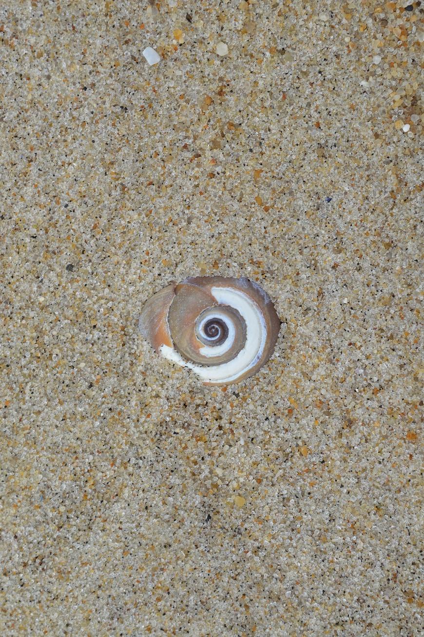 Moonshell Eye