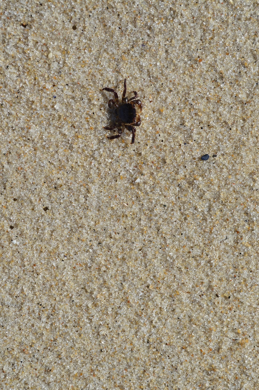 Tiny Wee Crab