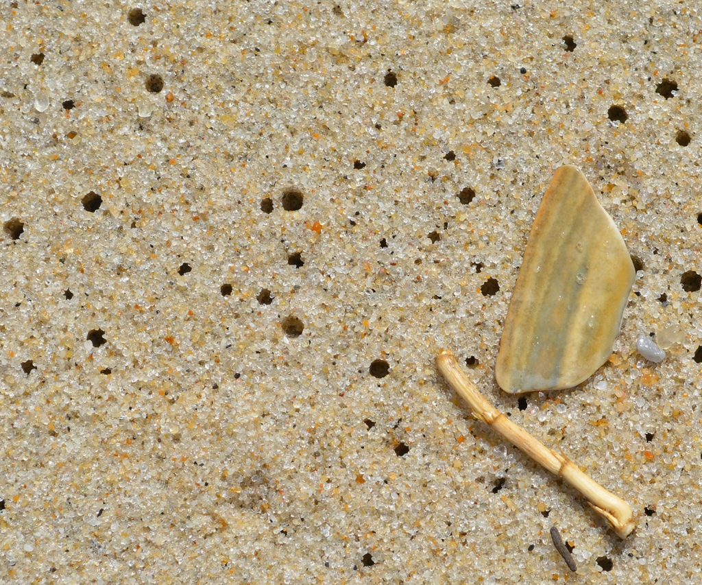 Stick, Reed, Pebble, Shell … andHoles!