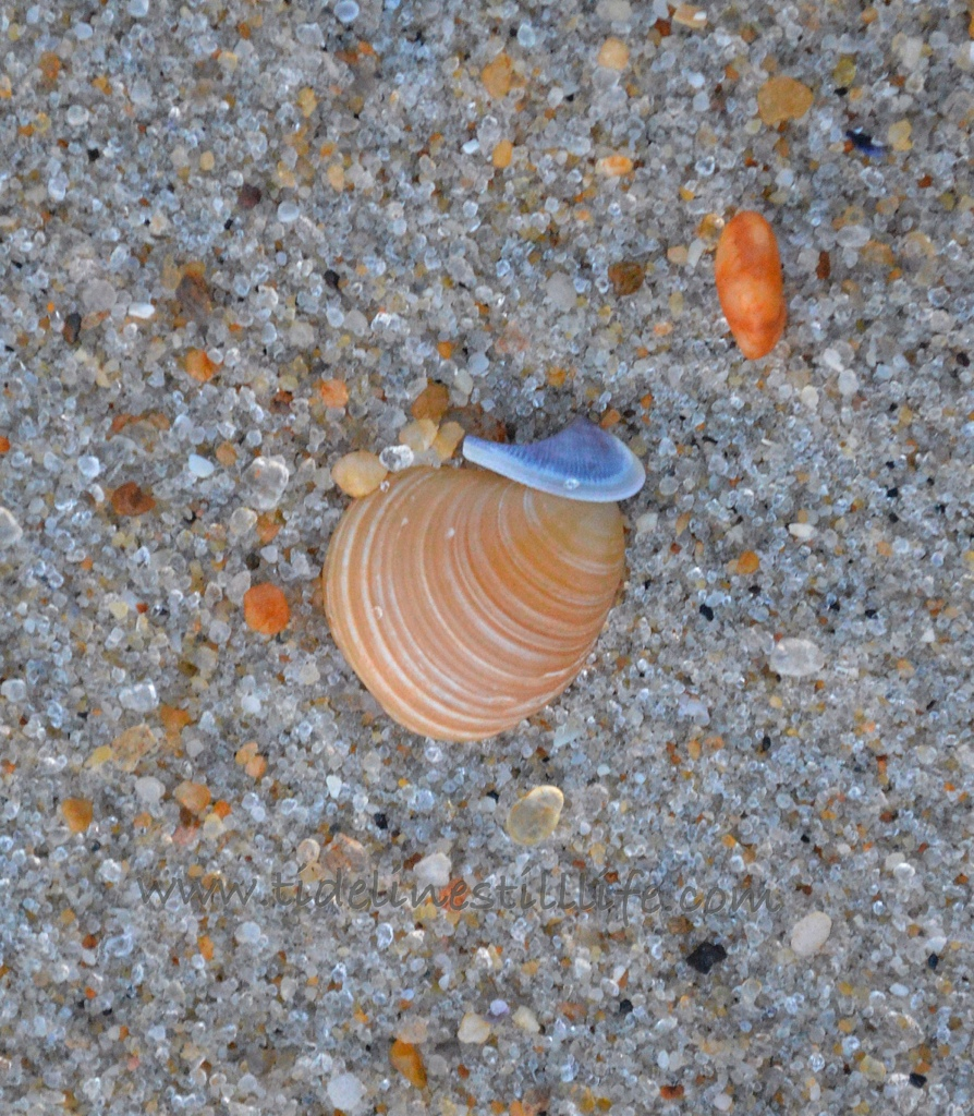 Swirl in Sand