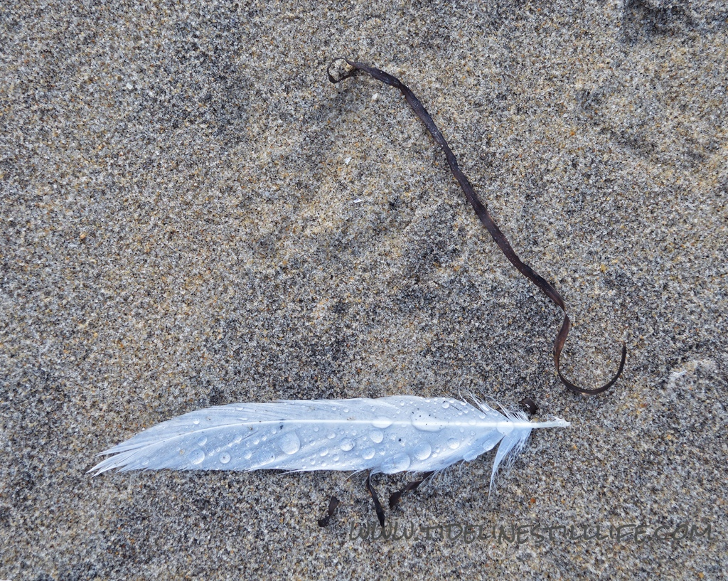 Feather and Hook