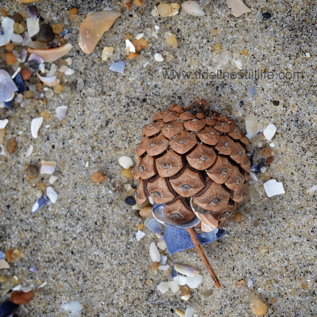 A Rolling Pinecone Gathers . . .
