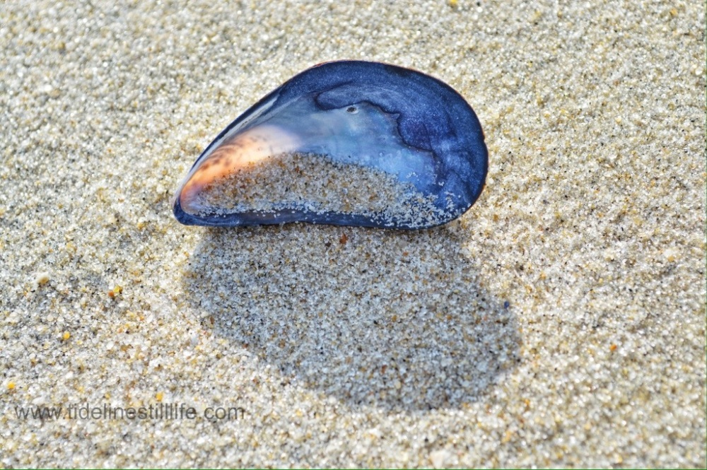 Still Life with Light, Sand, and Mussel