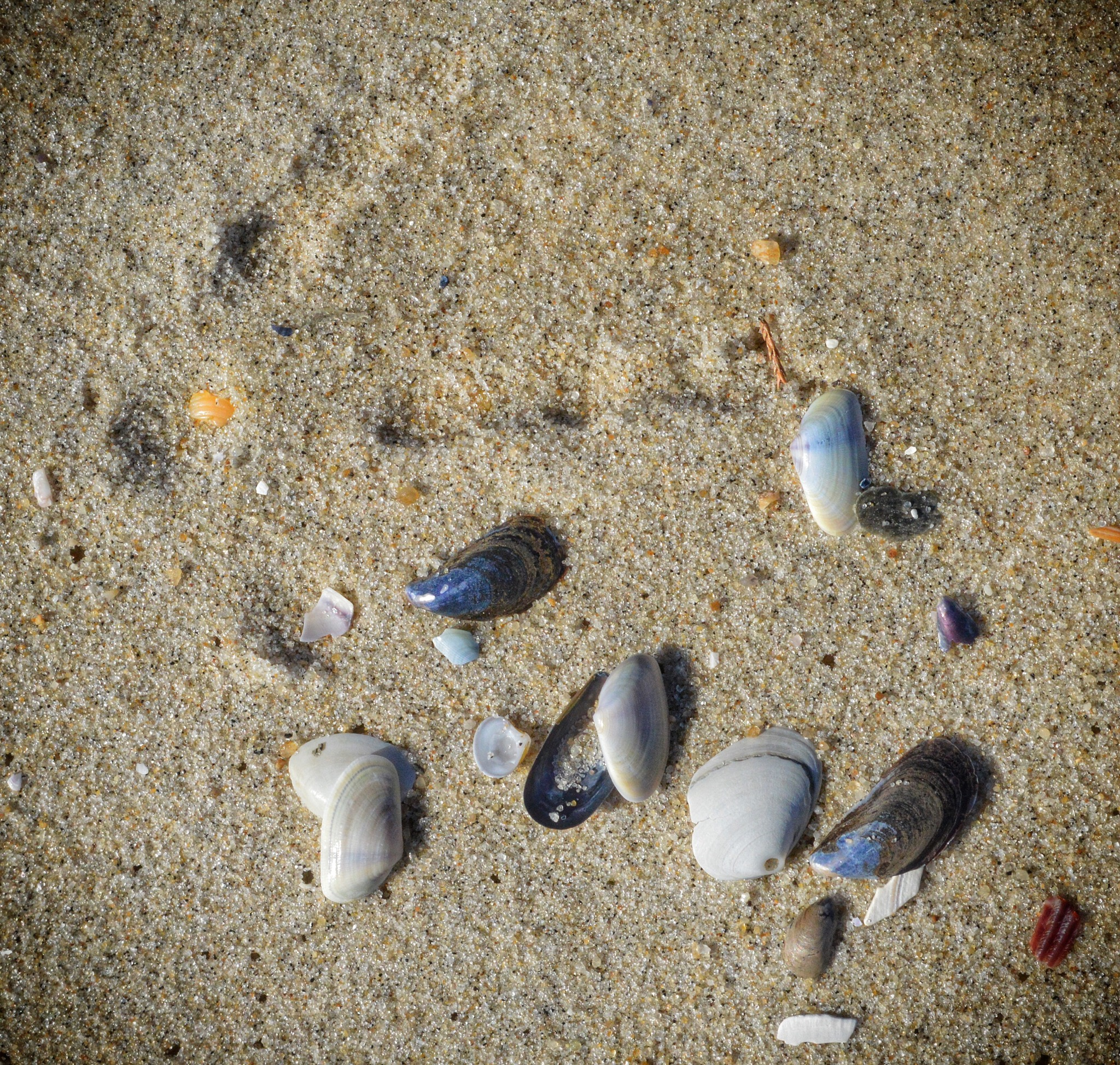 Leave Only YourFootprint
